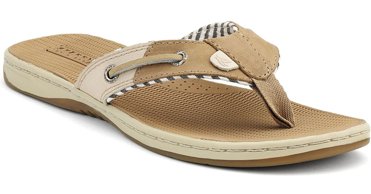 5d71bdb69a1611 Lyst - Sperry Top-Sider Sperry Women S Seafish Thong Sandals in Brown