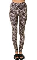 Gag Threads Leopard Leggings - Lyst