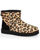Ugg Ugg® Australia Booties - Classic Mini Leopard Calf Hair - Lyst