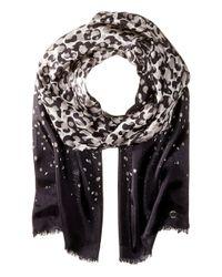Calvin Klein | Black Cascade Leopard Silk Scarf | Lyst