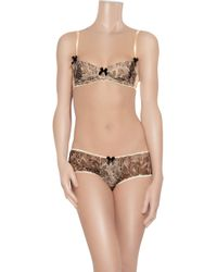 Mimi Holliday by Damaris | Brown Privee Lace-print Padded Plunge Bra | Lyst