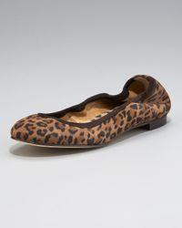 Manolo Blahnik   Brown Leopard-printed Suede Ballerina Flat   Lyst