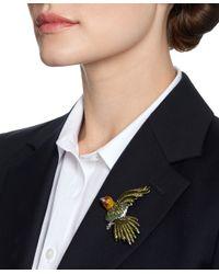 Brooks Brothers - Green Audubon Parrot Brooch - Lyst