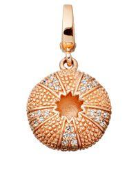 Astley Clarke - Pink Rose Gold Vermeil Sea Urchin Aphrodisiac Charm - Lyst