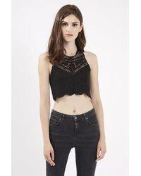 TOPSHOP - Black Crochet Halterneck Top By Goldie - Lyst
