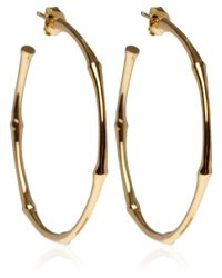 Dinny Hall | Metallic Medium Gold Vermeil Bamboo Hoop Earrings | Lyst