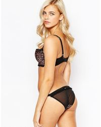 Scantilly - Brown Pounce Brief - Lyst