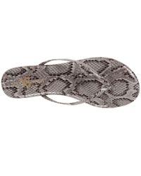 Yosi Samra Multicolor Roee Snake Leather Flip Flop