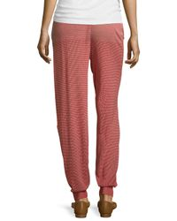 Stella McCartney - Pink Cotton Knit Tapered Leg Pants - Lyst