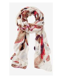 Express | White Feather Print Oblong Scarf | Lyst
