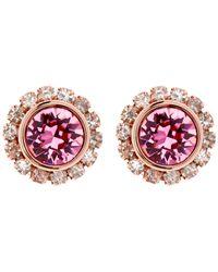 Ted Baker   Pink Sully Swarovski Crystal Stud Earrings   Lyst