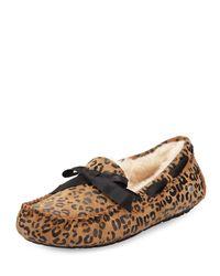 ce87a288d19 Lyst - UGG Dakota Leopard Bow-Tie Slippers
