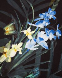 Ted Baker | Black Sazia Twilight Floral Top | Lyst