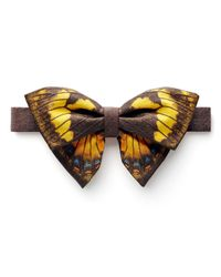 One Wolf - Brown Papilio Homerus Ulster Bow Tie for Men - Lyst