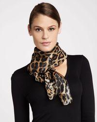Roberto Cavalli Leopardprint Chiffon Stole - Lyst