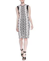 Roberto Cavalli Python-print Dress W Contrast Trim - Lyst