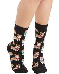 Socksmith Corgi, Fi, Fo, Fum Socks - Lyst