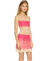 Loyd/Ford Lace Stripe Dress - Fuchsia - Lyst