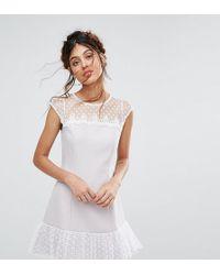 Elise Ryan Petite - Petite Spot Mesh Shift Dress With Pep Hem - Lyst
