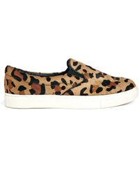 Steve Madden Ecentric Leopard Slip On Sneakers - Lyst