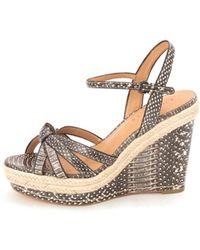 COACH - Womens Dalton Open Toe Casual Platform Sandals - Lyst