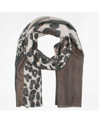Daniel - Taupe Cotton Block Animal Print Scarf - Lyst