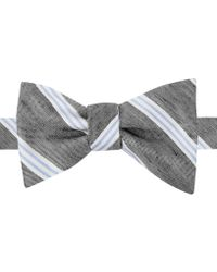 Tommy Hilfiger Double Stripe Bow Tie - Lyst
