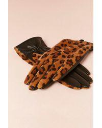 Forever 21 | Faux Fur Leopard Gloves | Lyst
