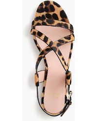 9adef4a3bdab J.Crew - Strappy Buckled Cora Sandals In Leopard Calf Hair - Lyst