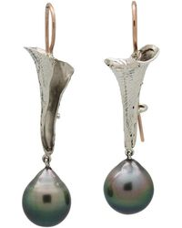 Lainey Papageorge Designs - Tahitian Conch Shell Earrings - Lyst