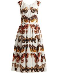 Dolce & Gabbana - Butterfly Print Pleated Cotton Dress - Lyst