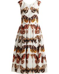 Dolce & Gabbana - Butterfly-print Pleated Cotton Dress - Lyst