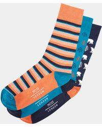 Moss London - Navy, Orange & Blue Polar Bear Sock 3-pack Boxed Gift Set - Lyst