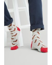 Moss London - Grey Marl With Sausage Dog Socks - Lyst