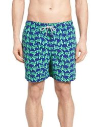 Tom & Teddy - Turtle Print Swim Trunks - Lyst
