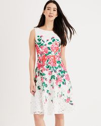 Phase Eight - Janette Printed Lace Fit & Flare Dress - Lyst