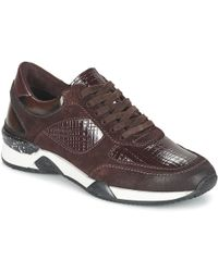 Dream in Green - Farrica Women's Shoes (trainers) In Red - Lyst