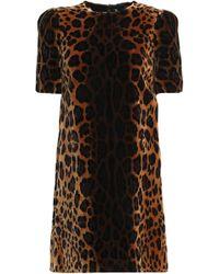 Dolce & Gabbana - Leopard-print Velvet Mini Dress - Lyst