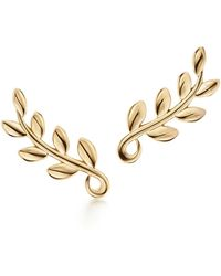 Tiffany & Co. - Paloma Picasso. Olive Leaf Climber Earrings In 18k Gold - Lyst