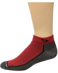 Drymax Sport - Lite Trail Running Mini Crew 3-pack (october Pink/anthracite) Crew Cut Socks Shoes - Lyst