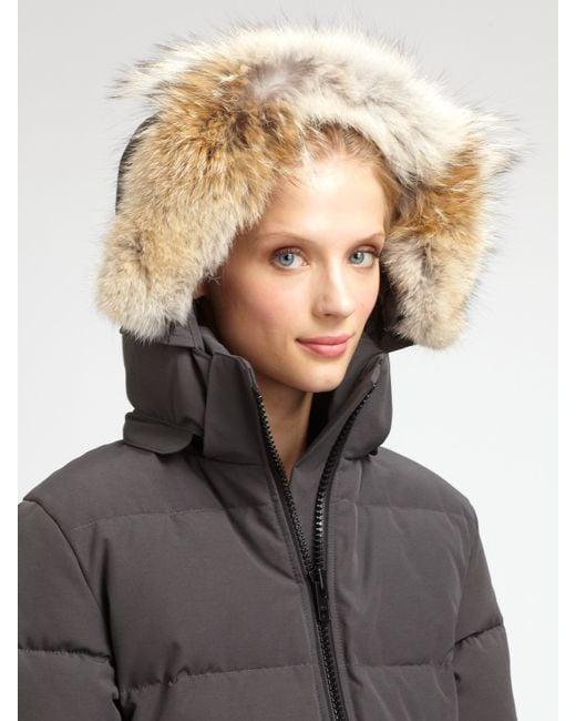 canada goose BRITTANIA zimowa