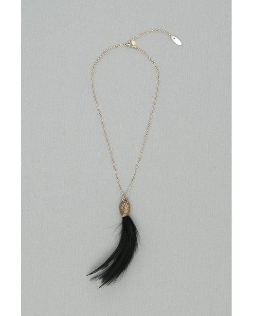 Lanvin - Black Swan Feather Necklace - Lyst