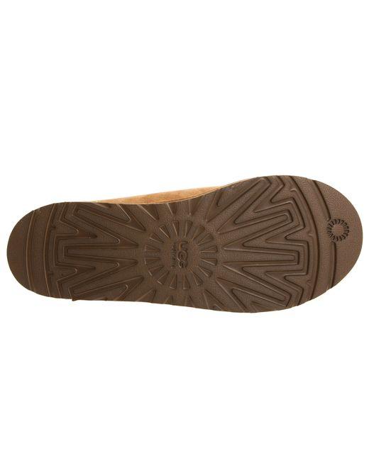 brown tasman uggs