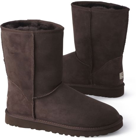 chocolate short uggs