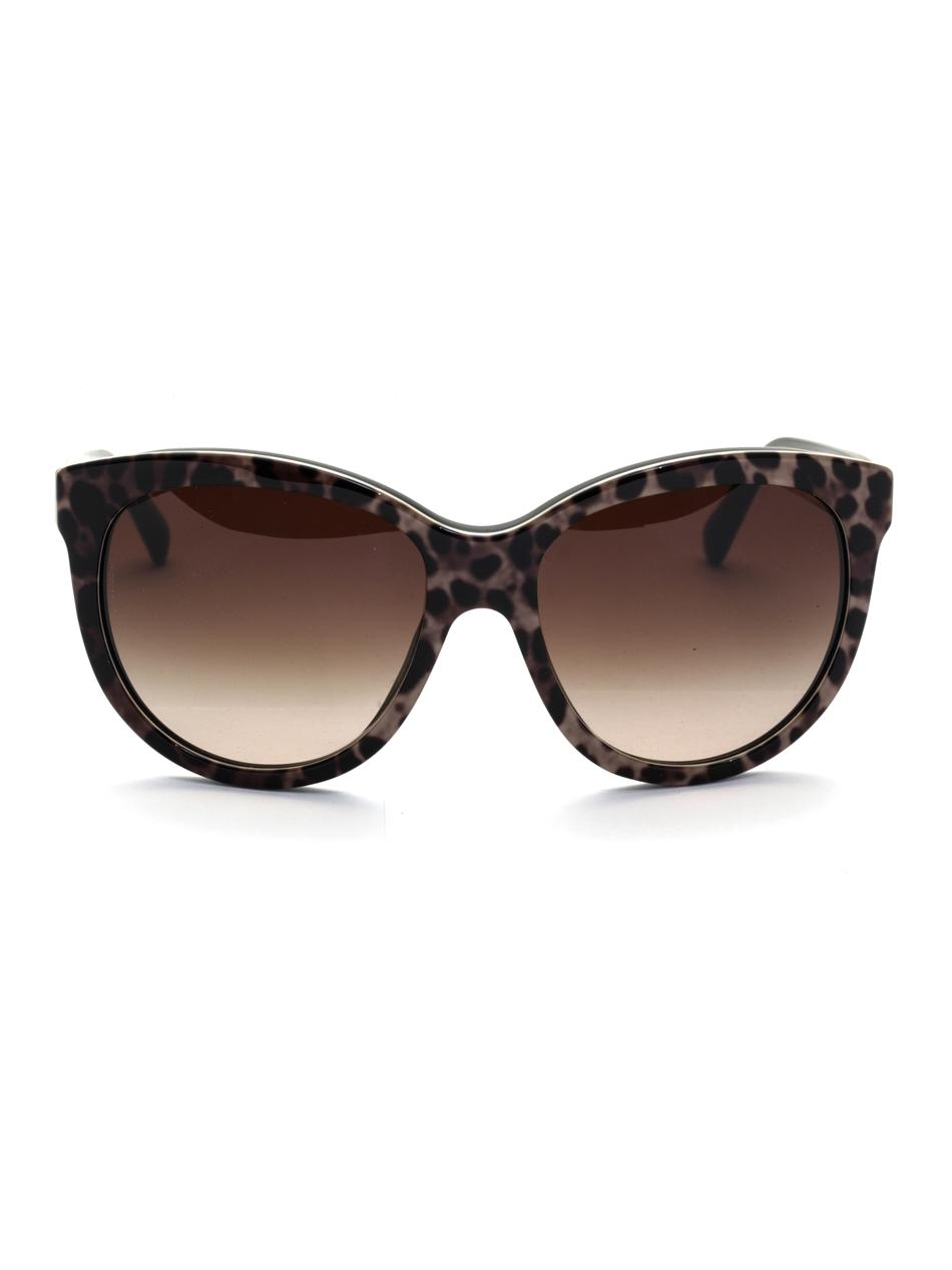 Dolce Amp Gabbana Leopardprint Sunglasses Lyst
