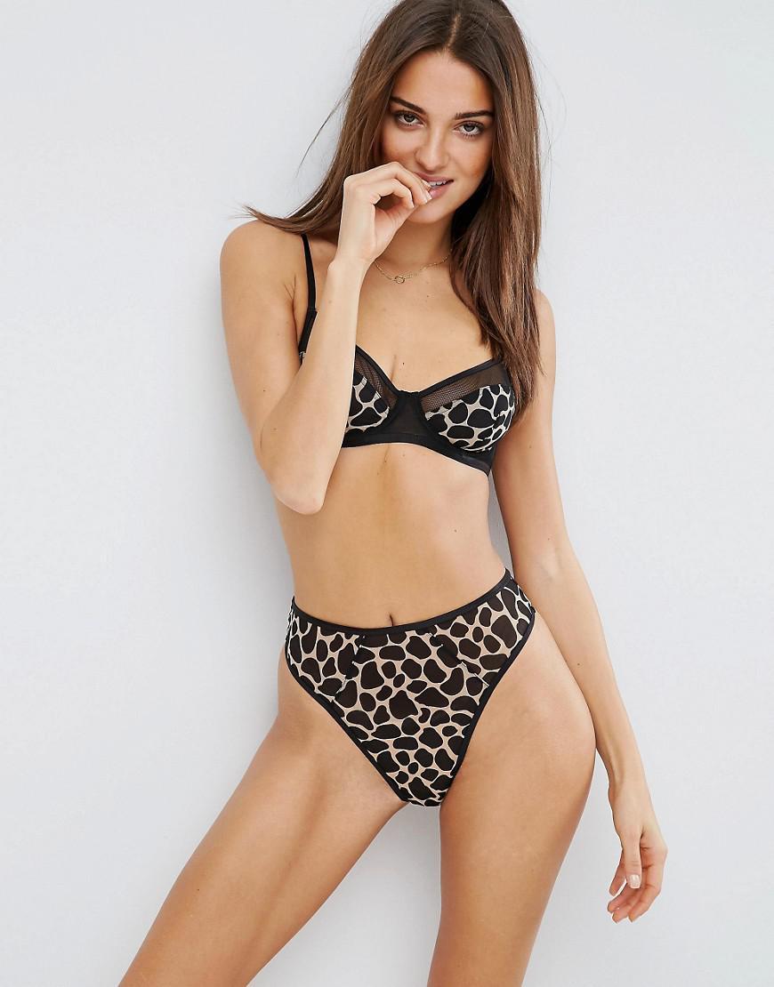 Leopard matchmaking